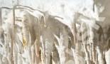 Widok z bliska kalcytowej szaty naciekowej w Sali Białej