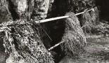 Splavené zvyšky poľnohospodárskych plodín a pôdy v jaskyni Domica po záplave v roku 1981. Foto: J. Sýkora