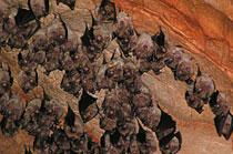 Domica-barlang